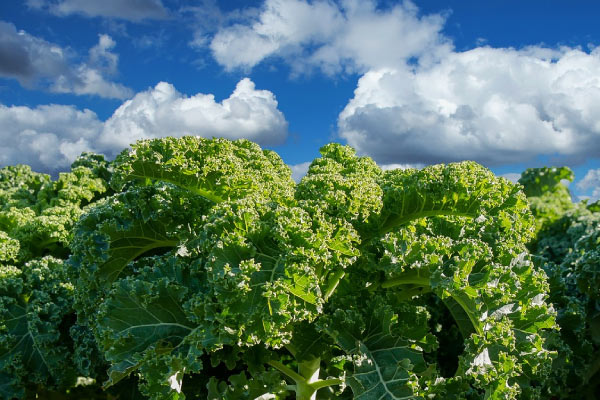 kale under blue sky and fluffy clouds helps remove plaque from teeth